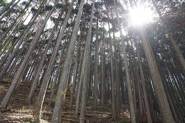 未来の匠Hyogoの木箱は、六甲山の間伐材を使用しており、森を守る活動を応援しています。
