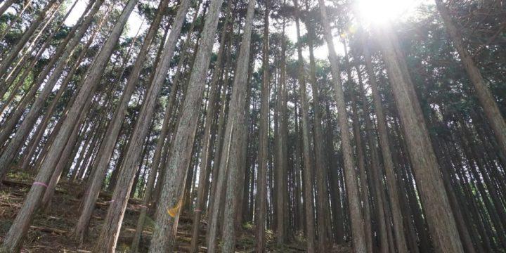六甲山の森林